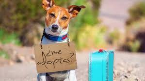 Fotografia Mascotas en adopción