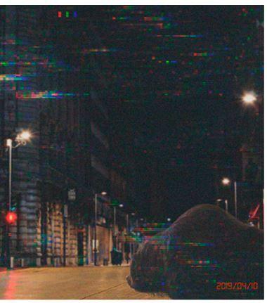 Foto de Oso Pardo en calles de la CDMX