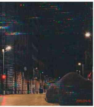 Oso Pardo en calles de la CDMX