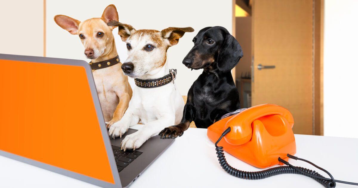 Fotografia Tres perros hacen una búsqueda en Internet